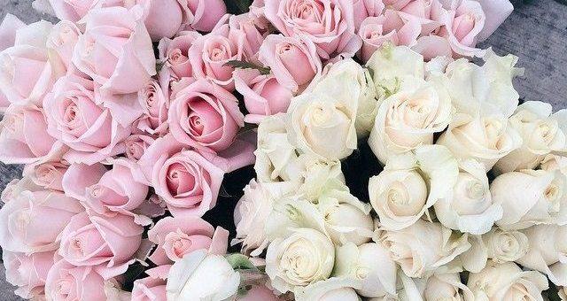 λευκά και ρόζ τριαντάφυλλα