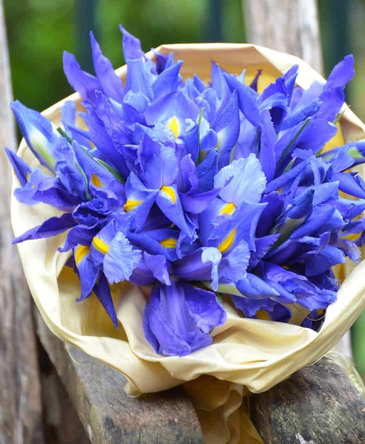 wedding bouquet with iris