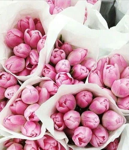 ανθοδέσμες με ρόζ τουλίπες